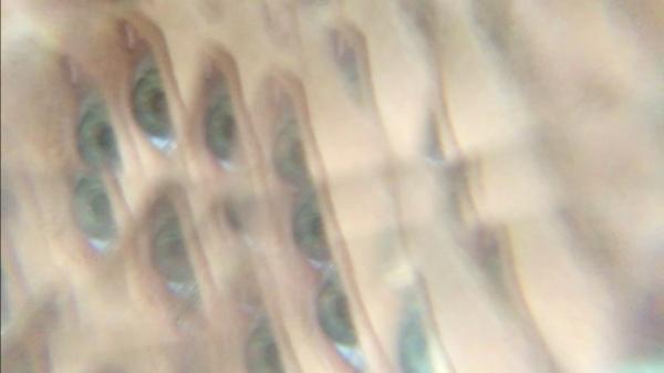Blurred, kaleido image of an eye